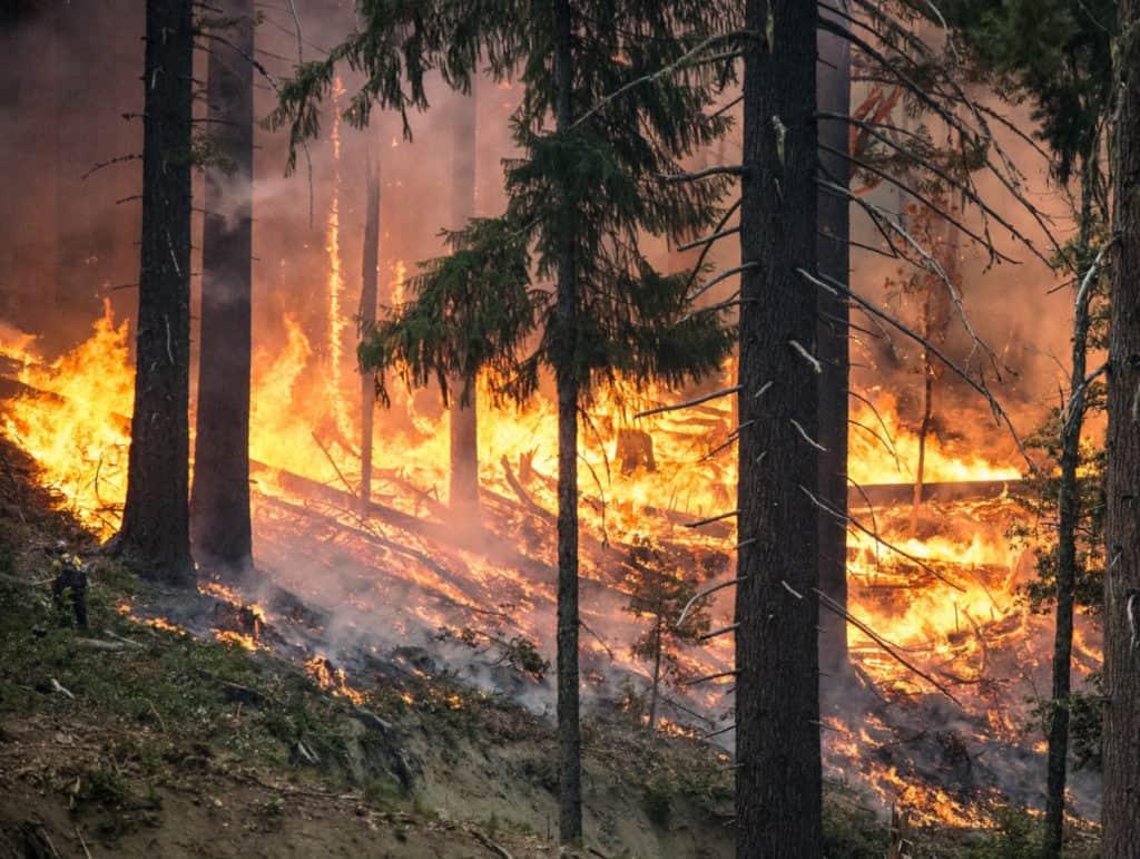 wildfire spreading under trees on hillside