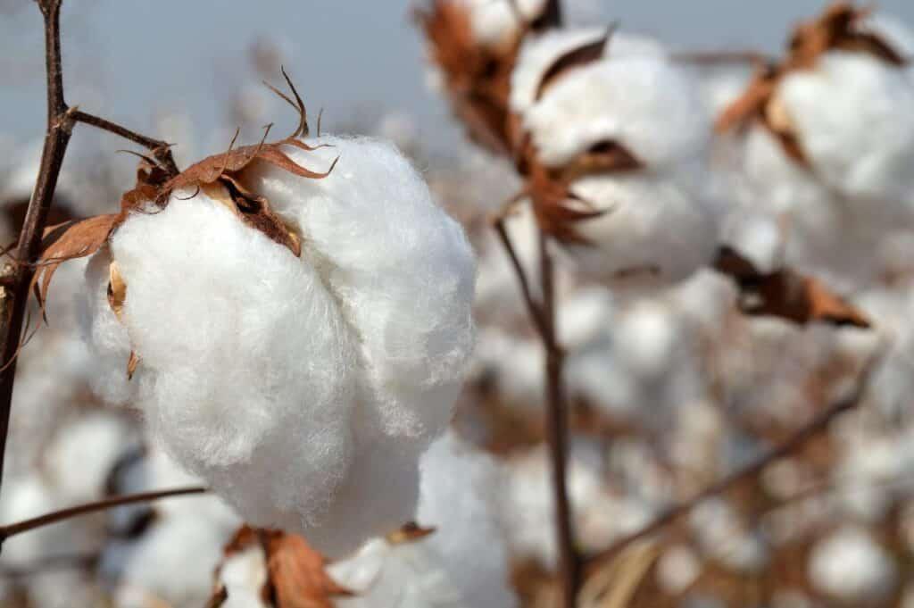 does cotton smolder