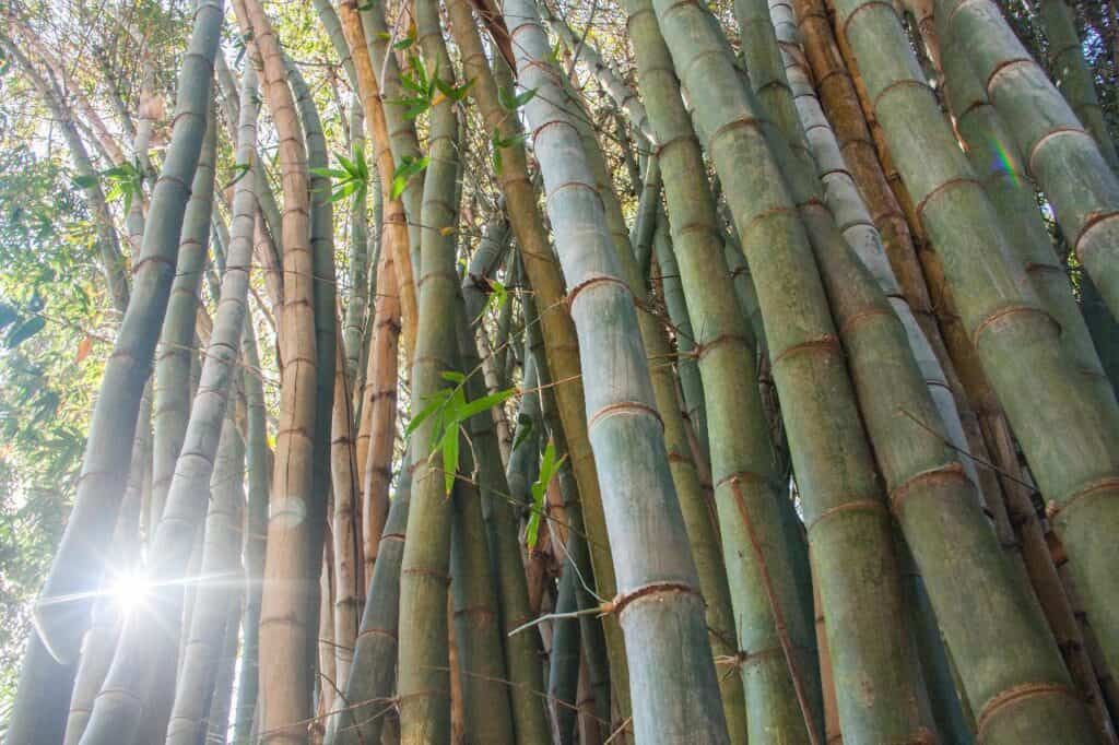 is bamboo flammable?
